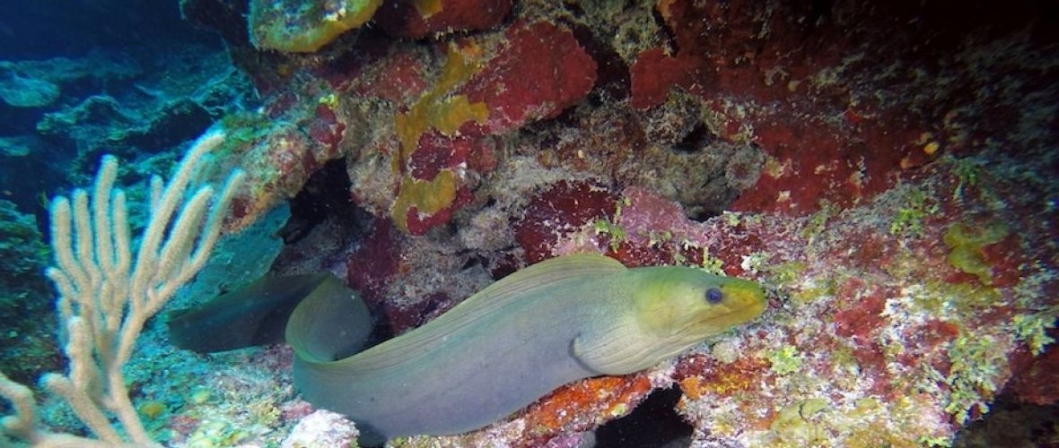 Swimming Eel